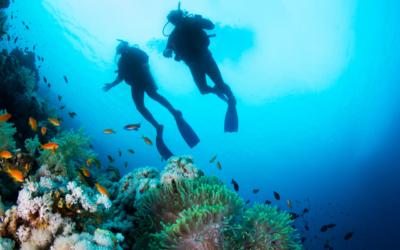 Plongée en Martinique : les 5 meilleurs spots